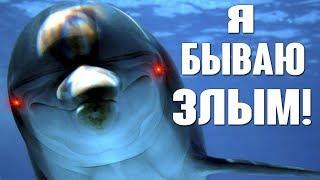 Подборка: Дельфины нападают на людей