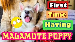 VLOG #28: FIRST TIME HAVING AN ALASKAN MALAMUTE PUPPY & HER FIRST REACTION WHEN GOES TO NEW HOME