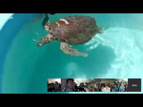 The Turtle Hospital: Virtual Field Trip
