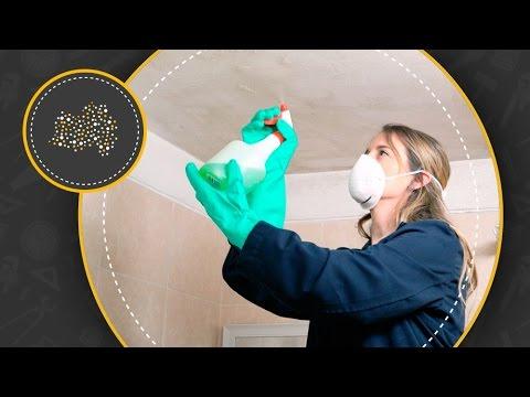 como limpiar hongos en el techo