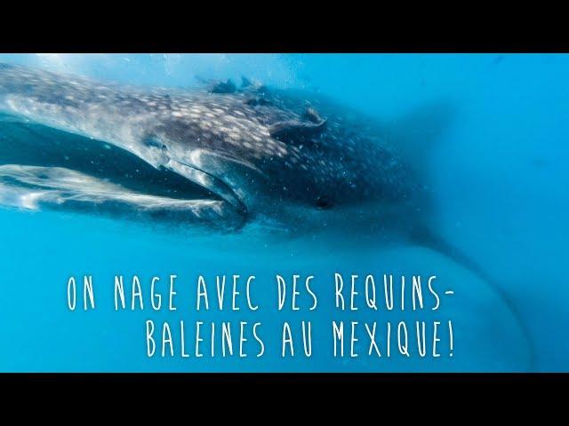 On nage avec des requins-baleines au Mexique! - [Vlog #12]