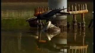 The Bait-Fishing Crow