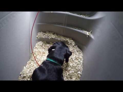 buy-a-dog-house-underground-dog-house