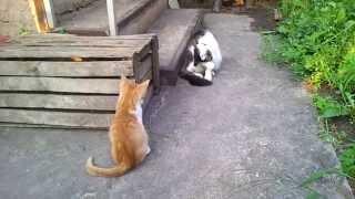 Котенок атакует