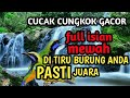 Masteran Burung Juara Cucak Cungkok Gacor Ful Isian  Mp3 - Mp4 Download
