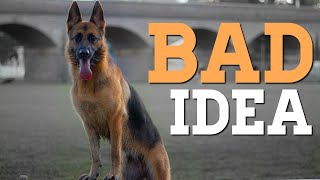 Why a German Shepherd is not for you