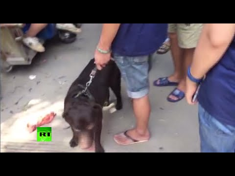 Hidden cam captures China's 'barbaric' Yulin dog meat festival preparations