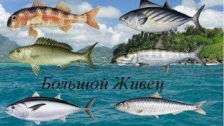 Русская Рыбалка 3.9 Большой живец