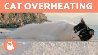 Is My CAT TOO HOT? 🐱☀️ + How to Keep Them COOL
