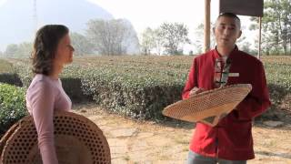 Tea Farm in Guilin, China - spinning around the world