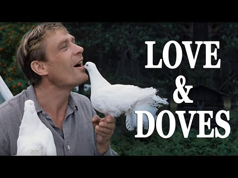 Love And Doves With English Subtitles
