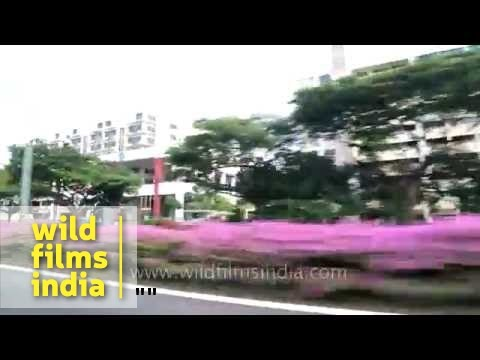 Drive-through Singapore city