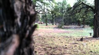 Unit 61 Elk