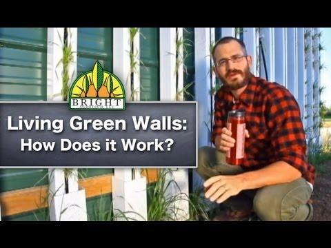 How Do Green Walls Work?