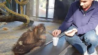 Funny Magic with Monkey DPF