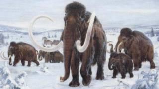 Фауна ледникового периода. Рассказывает палеонтолог Иварс Зупиньш