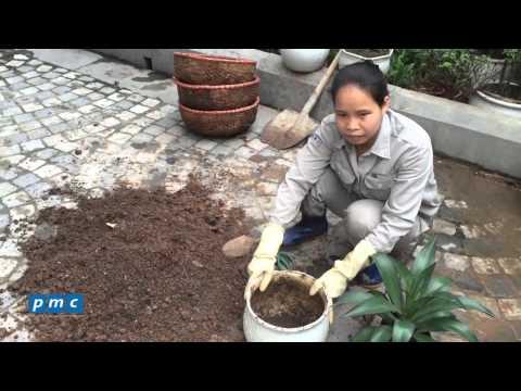 Chăm sóc cây cảnh - Kỹ thuật làm đất trồng cây trong chậu