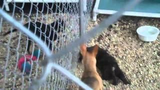 Lnf Dog Rescue's Mocha's Pups (nc Tornado) Kayleigh & Danielle 4-28-11