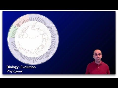 K-Bio Evolution 7: Phylogeny