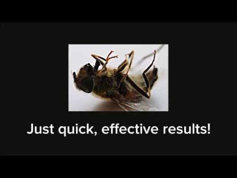 Best Hornet Control in Grand Prairie | 817-617-8010 | FREE ESTIMATES