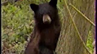 Диалоги о Животных (1999) Гренландия ,Галапагосские острова
