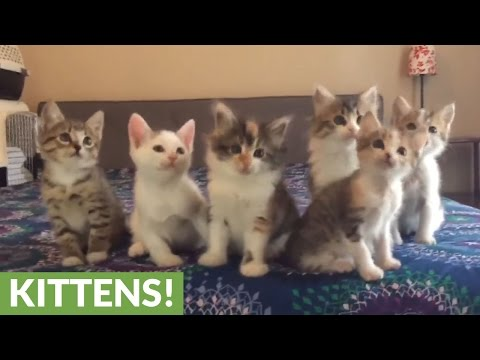 Kittens adorably move their heads in sync