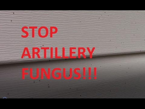 How To Stop Shotgun Mold Fungus Artillery Mold In Your