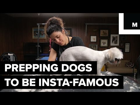 How to Instagram Dogs For a Living | How She Works