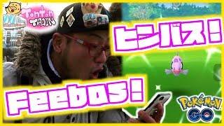 【Pokémon GO in NL】Feebas Day!! SHINY Feebas in Tonton Train!! ヒンバスデイ!色違い出たっ!【オランダでポケモンGO】