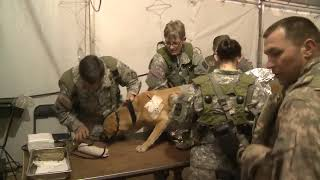 Veterinary Services At Fort Bragg