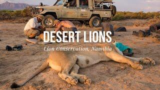 Desert Lion Conservation, Namibia