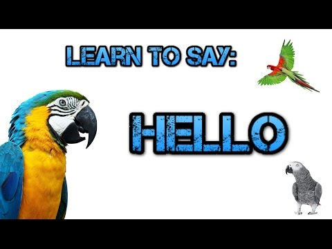 Teach your Parrot to say Hello! – Parrot Talk