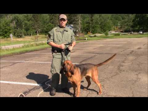 How Long Does it Take a Bloodhound to Track and Locate a Missing Person?