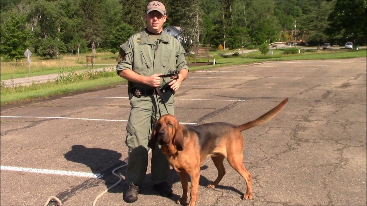How Long Does it Take a Bloodhound to Track and Locate a Missing Person? -  YouTube