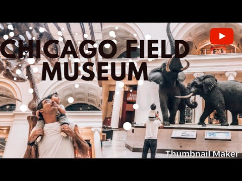Our trip to the field museum            by Katie Herzig