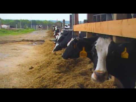 Hardest Working American: Dairy farmer