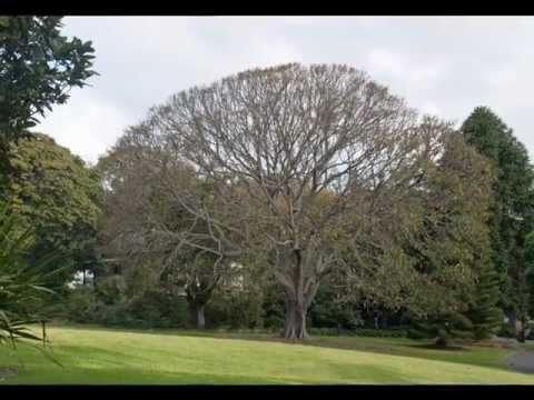 Australia: Sydney Royal Botanical Gardens