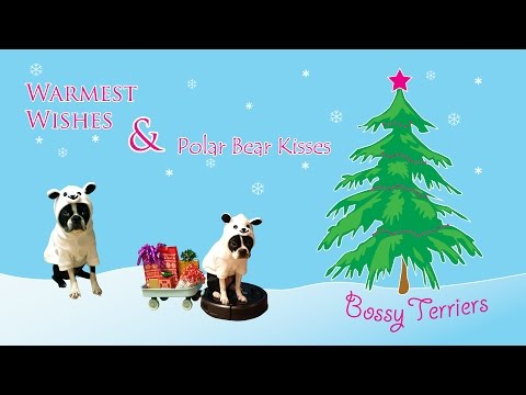 Boston Terrier Dog Riding Roomba Sled - Christmas Sing Along