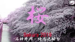 2019 練馬区桜台 石神井川の桜 Sakura Shakujii River MP3
