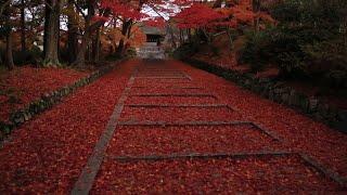 (Autumn Leaves)京都の紅葉(2012年Long Ver.)