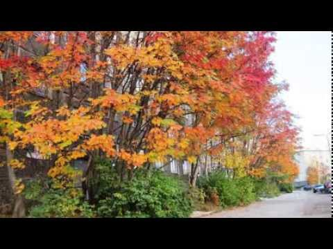 Видео — Апатиты — Осень