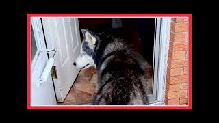 OAKLEY IS SCARED OF THE DOOR