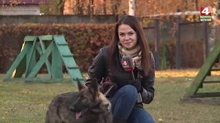 Служебные собаки [БЕЛАРУСЬ 4| Могилев]