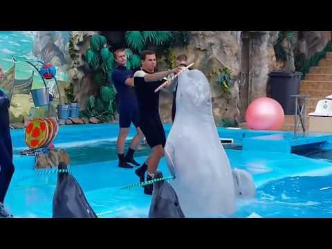 дельфинарий НЕМО Харьков-2017