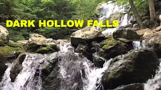 Dark Hollow Falls Hike | Momma Bear and Cubs