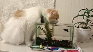 Мурка любит утолять жажду в аквариуме!