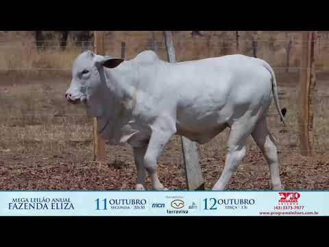 LOTE 133