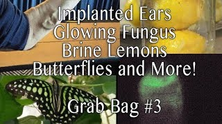 Implanted Ears, Butterflies, Bioluminescent mushrooms, and more! - Grab Bag #3