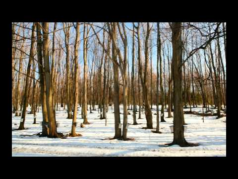 REEL DU SIROP D'ÉRABLE (MAPLE SUGAR)  -André Proulx (2001) 100 ANS DE FOLKLORE