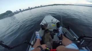 26 pound King Salmon kayak fishing - Hobie Pro Angler 14